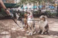 Dogs in Charleston