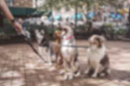 Dogs with Dog Walker
