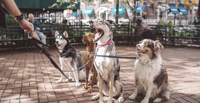 Impulse control for puppies