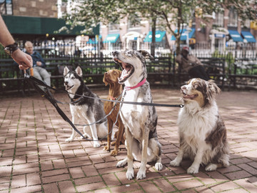 Condomínio não poderá multar morador que circula com animal de estimação na coleira