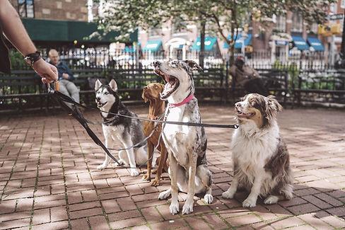 כלבים יושבים בפרק