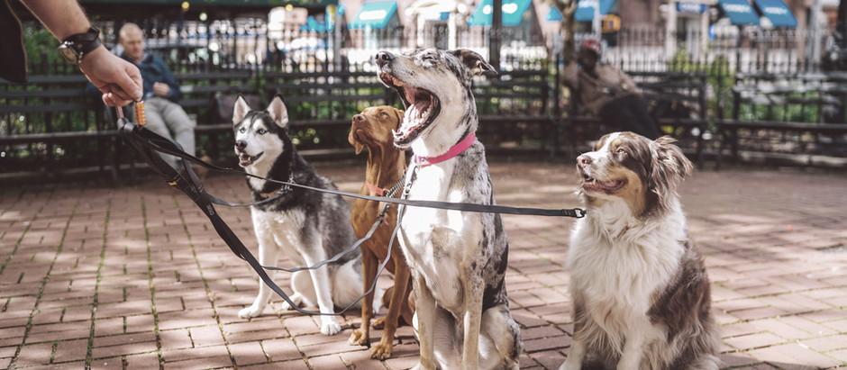 Köpekler Neden Toprak Yer ?