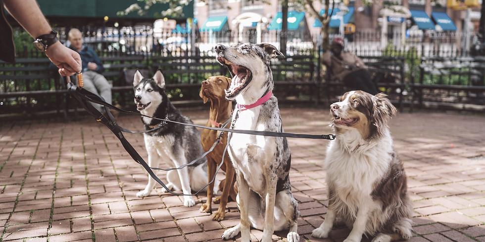 Szkolenie psów w grupie - poziom podstawowy