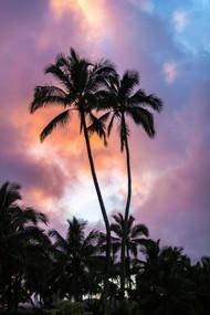 Couple of Palms