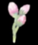 Rose%20Buds_edited.png
