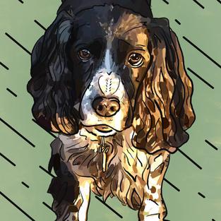 Digital Pet Portrait   Bailey (In Memory)