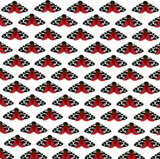 Pattern   Speckled Moth