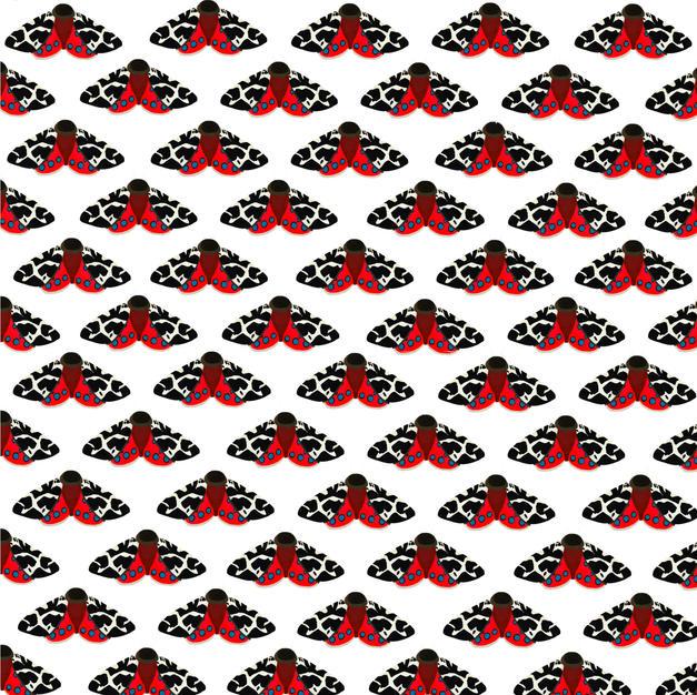 Pattern | Speckled Moth