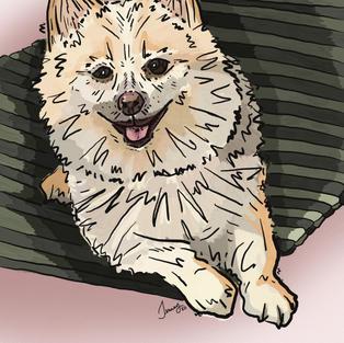 Digital Pet Portrait   Benny