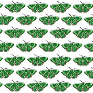 Pattern   Green Moth