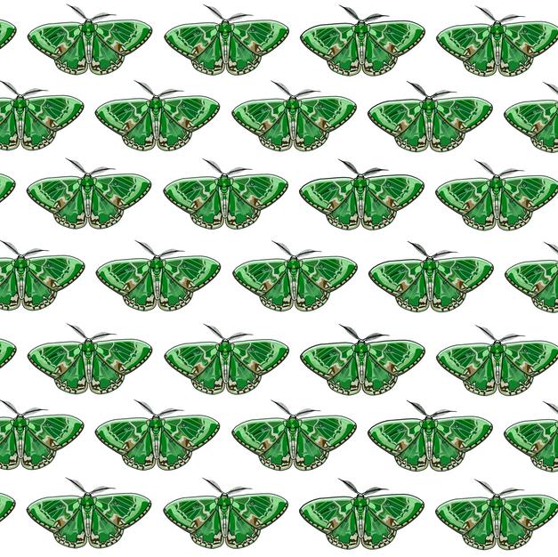 Pattern | Green Moth