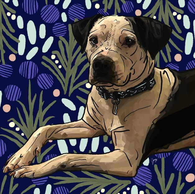 Digital Pet Portrait | Dart
