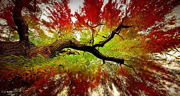 BLEND603_Forest_Trees_1.jpg