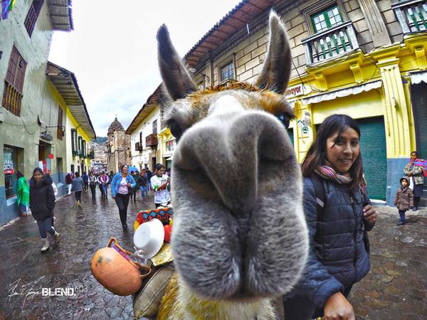 Smell Test, Cusco, Peru