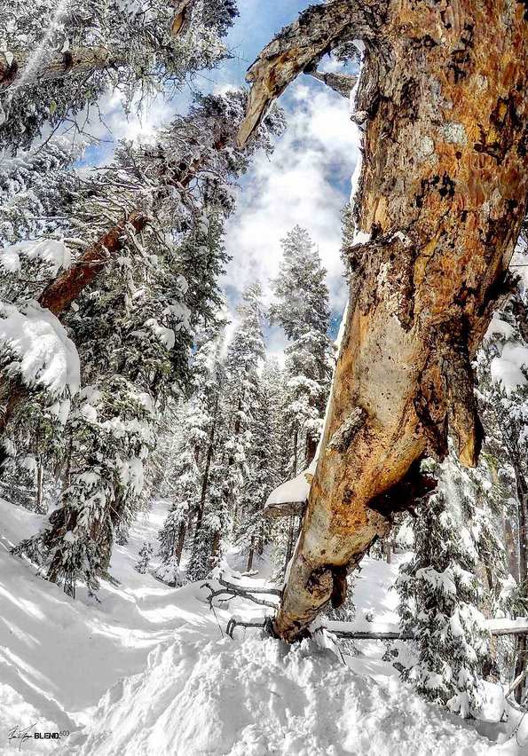 "Telluride, Colorado | ""Trees"""