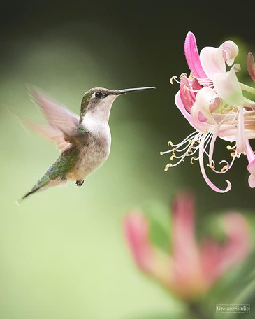 Hummingbird Bliss