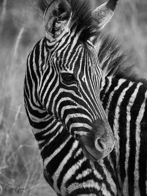 """Zebra Fowl"""