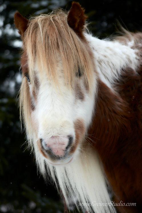 """""""Winter Pony"""""""