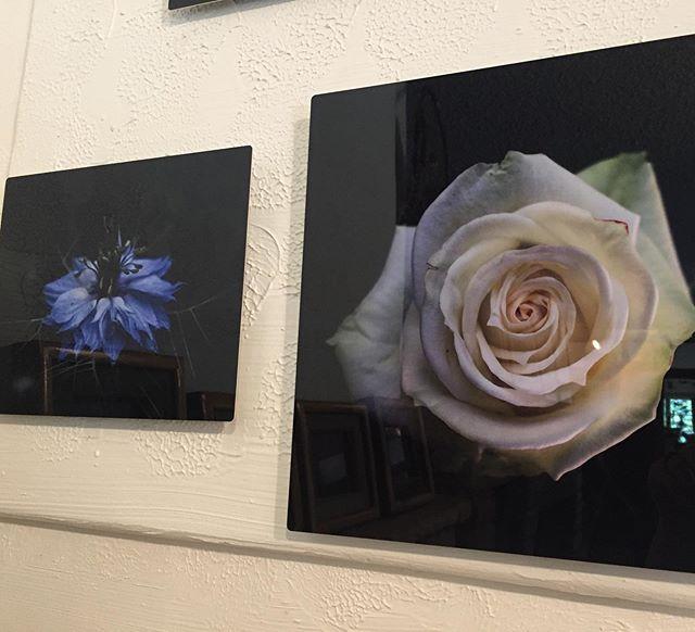 #photosofflowers #rose #loveinthemist #m