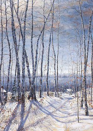 Northern Birches