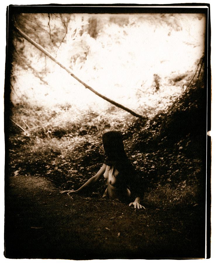 N in the Woods