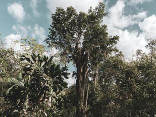 In the Dominican Republic jungle
