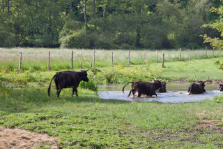 Elevage préhistorique en Charente