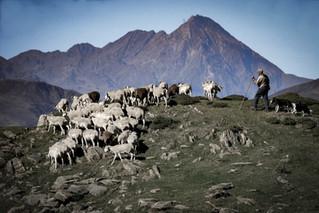 Dans les pas des bergers d'Artigue