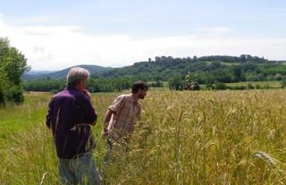 Comment faire du blé différemment?