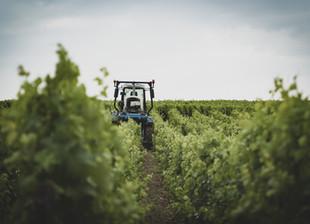 Into the Sancerre Vineyard