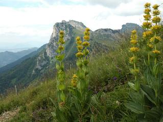 Voyage au coeur de ce qui nous soigne encore aujourd'hui... le règne végétal !