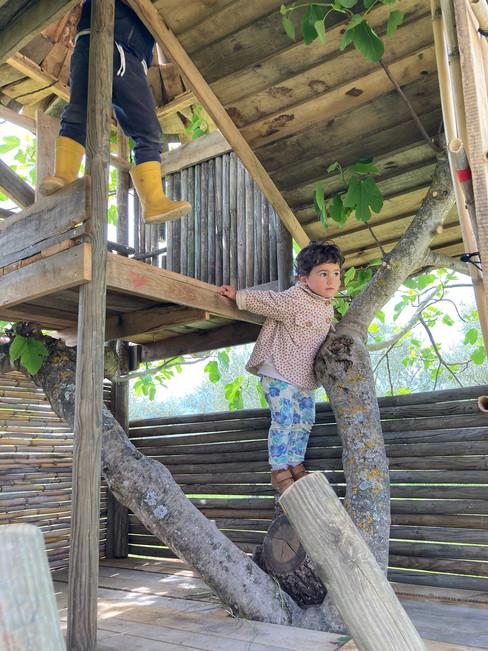 3l AleDima Casetta sull'albero Noè 3.jpg