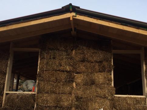 AleDima Green Architecture 24 (2).JPG