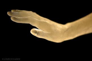 aledima hand reflections aledima.jpg