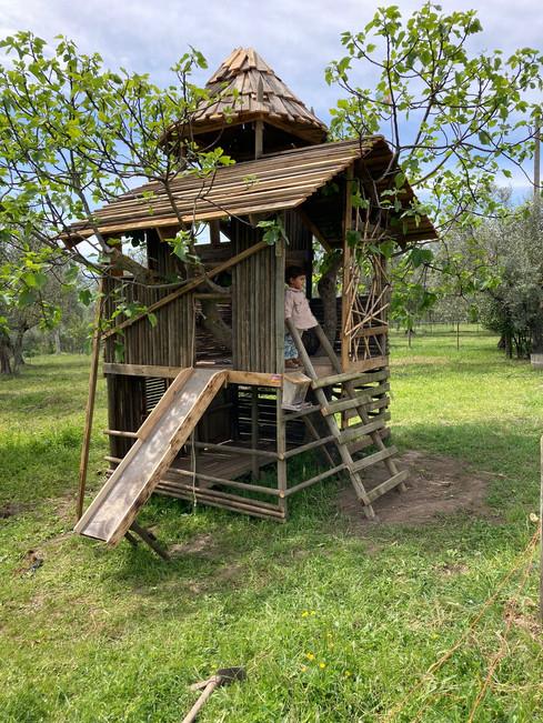 3h AleDima Casetta sull'albero Noè 3.jpg