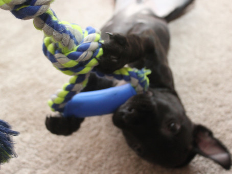 Training line - the move to online dog training and support, just hang in there.