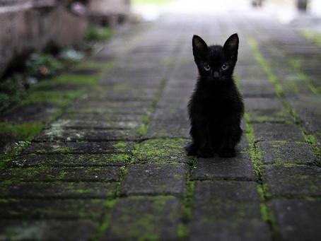 17 août : journée internationale des chats noirs. Superstitions , et croyances infondées.