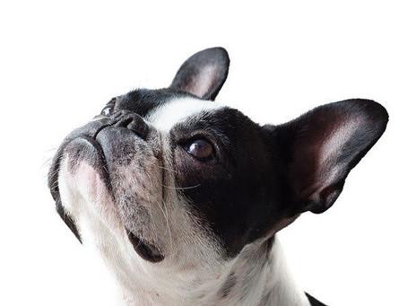 26 août: Journée internationale du chien !