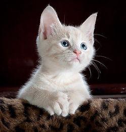 Cat-Sitter_Bagneux_Sceaux_92 (3).jpg