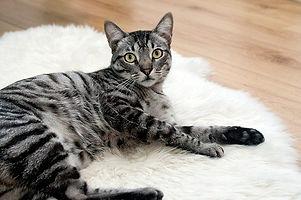Cat-Sitter_Bagneux_Sceaux_92 (2).jpg