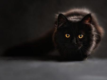 Le chat, qui est-il ?
