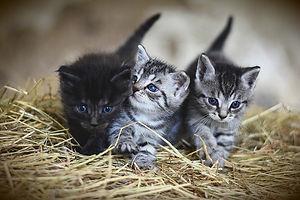Cat-Sitter_Bagneux_Sceaux_92 (5).jpg