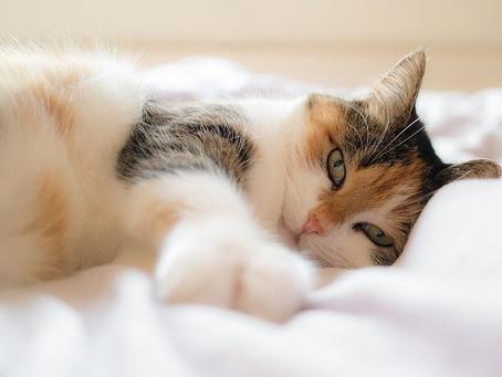Où faut-il et où ne faut-il pas caresser votre chat ?