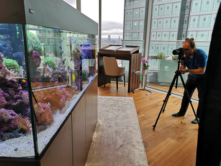 How to Get Great Reflection-free Aquarium Photo