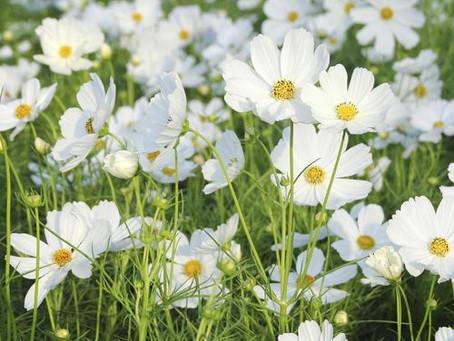 Как ароматерапията може да допринесе за интимния комфорт при жената?