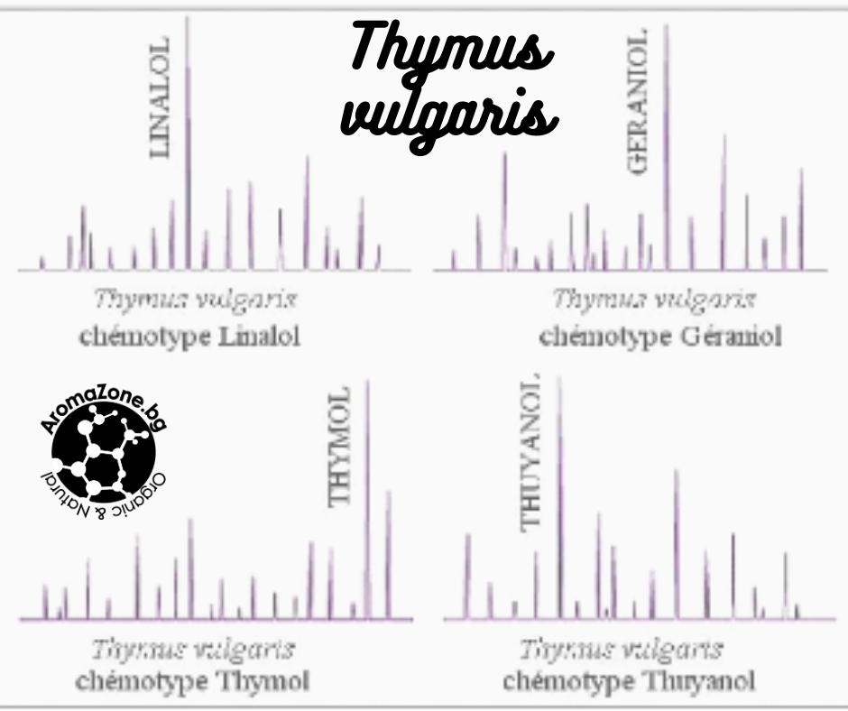 Биохимичен състав на различните видове мащерка от вида Thymus vulgaris