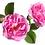 Thumbnail: BEAUTANICAE - БИО млечна мицеларна вода с роза