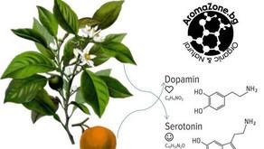 Етерични масла и хормони!
