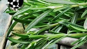 Розмарин...масло, билка и красив декоративен храст