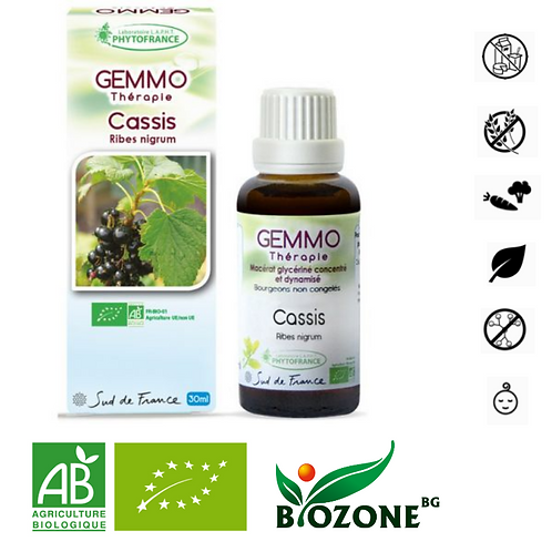 Гемотерапия - БИО мацерат КАСИС - Ribes Nigrum